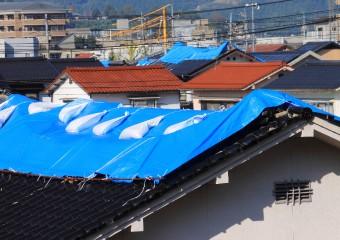 養生された屋根