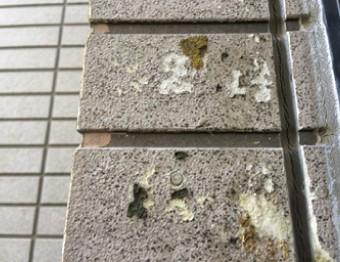 下地が剥がれてきた外壁材