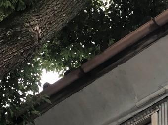 木が覆いかぶさる
