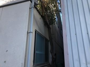 波型スレートの外壁