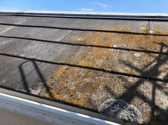 屋根にカビ