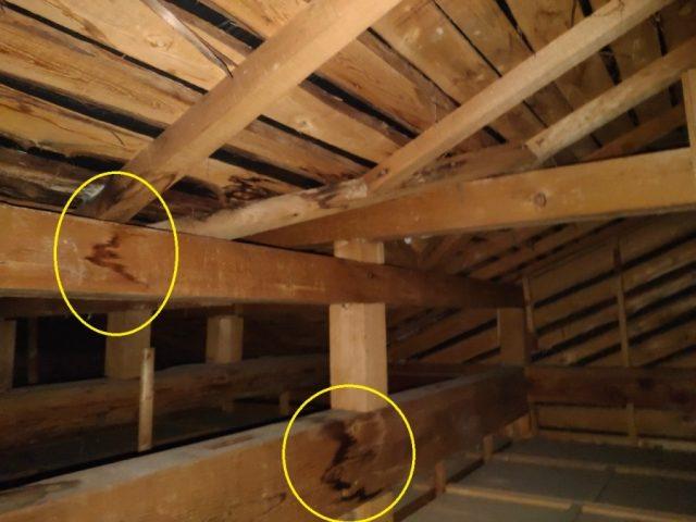 天井裏で雨漏りの点検