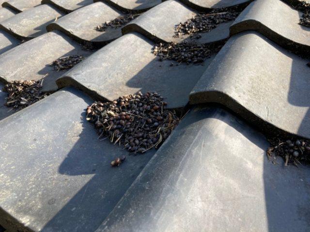 八尾市で屋根掃除をして雨漏り補修工事をしました。