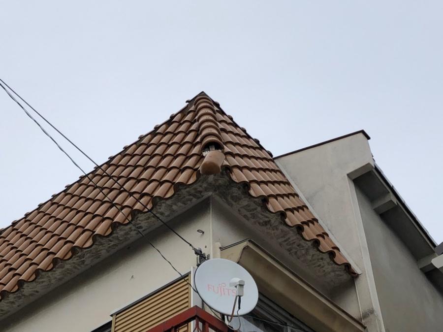 見上げた屋根