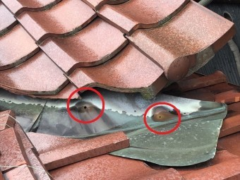 八尾市 屋根 銅板劣化