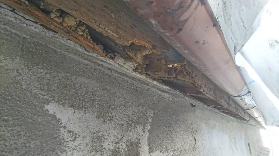 八尾市 壁の中の木 腐る