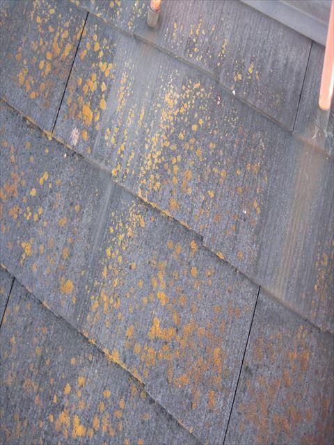 八尾市 屋根 変色
