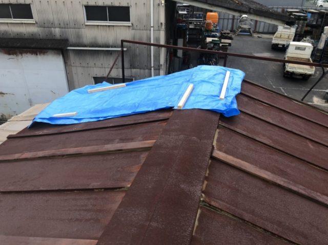 屋根ブルーシートかけ