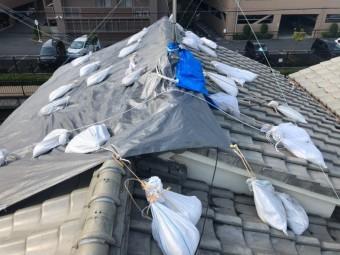 屋根に上り調査