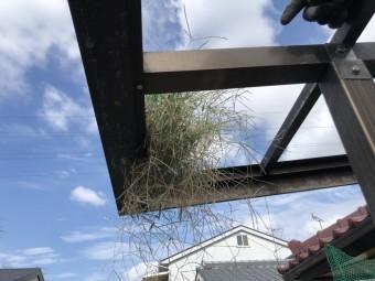 八尾市 樋から草が生えている